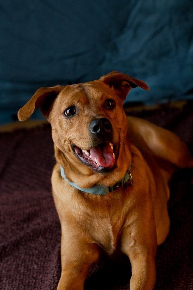 Adopt Bailey On Petfinder Dog Adoption Dogs Animals