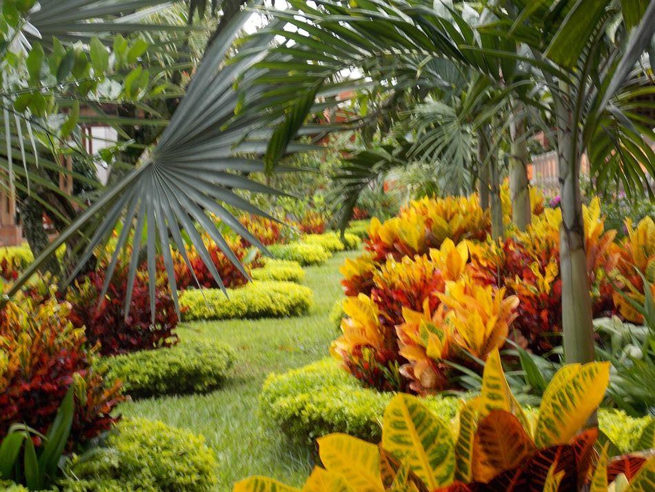 Croto en el jardin buscar con google como combinar las for Plantas ornamentales croto