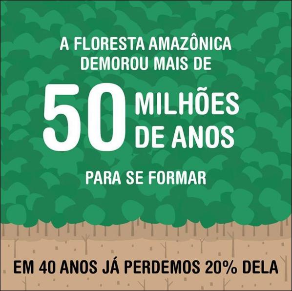 Causa Número 1 Do Desmatamento Na Floresta Amazônia São As
