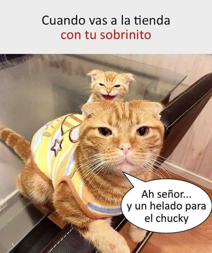 Pin By Nataly Marin On Memes In 2020 Funny Animal Pictures Memes Animals
