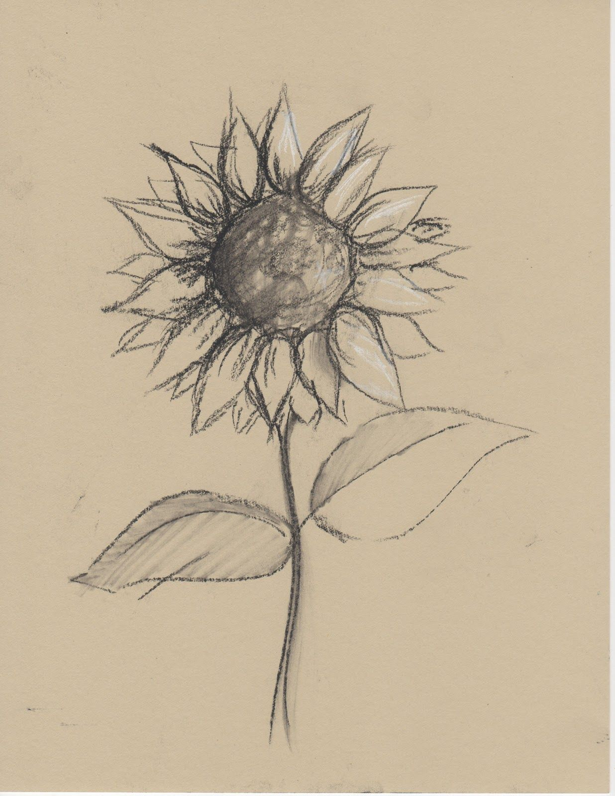 Drawings Of Sunflowers In Pencil Black+and+White+Sketch...