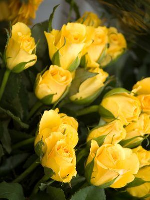 Yellow Roses Have Become A Por Symbol Of The Golden Anniversary