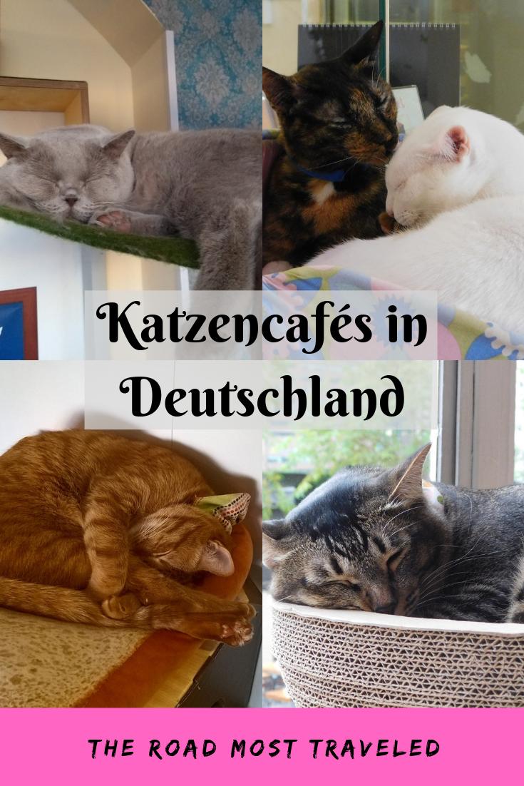 Katzencafes In Deutschland Deutschland Reisen Deutschland Urlaub In Deutschland
