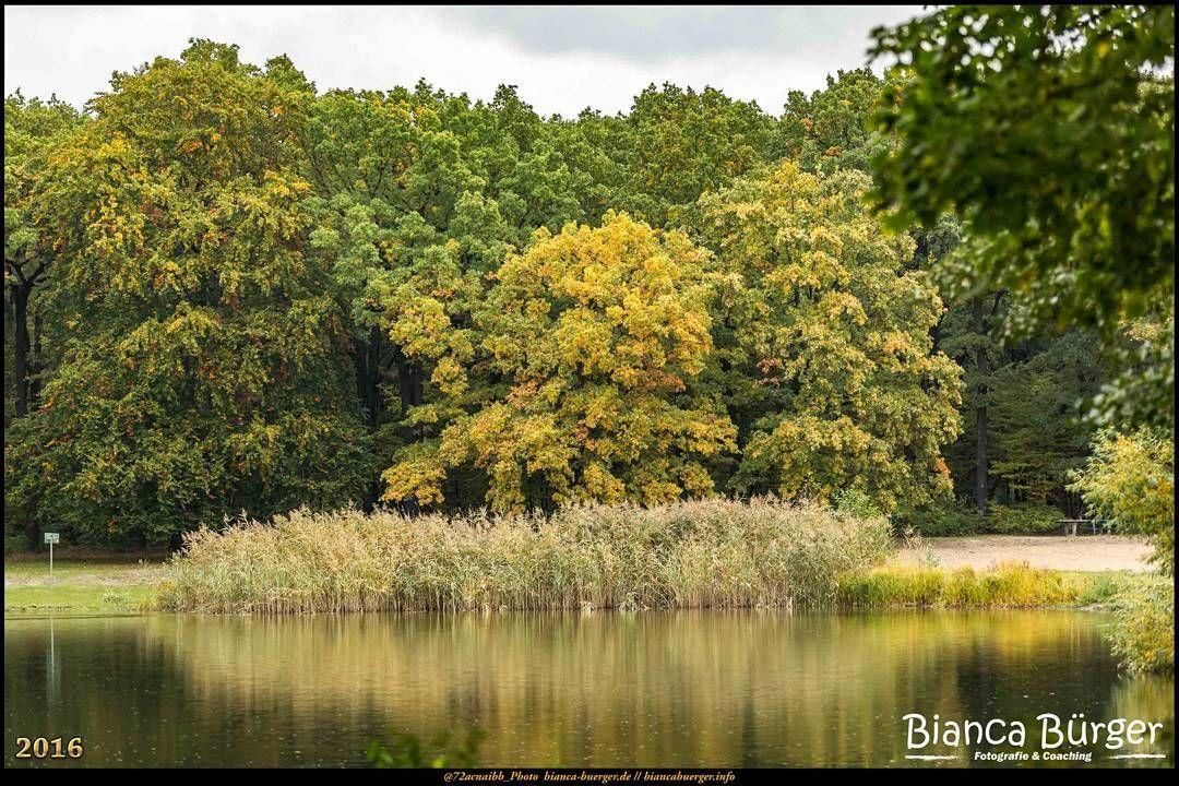 Volkspark Jungfernheide (Okt 2016) - Blick über den Jungfernheideteich #Berlin #Deutschland #Germany #biancabuergerphotography #igersgermany #igersberlin #IG_Deutschland #IG_berlincity #ig_germany #shootcamp #shootcamp_ig #pickmotion #berlinbreeze #diewocheaufinstagram #berlingram #visit_berlin #Herbst #autumn #canon #canondeutschland #EOS5DMarkIII #5Diii #Natur #nature #Charlottenburg #Landschaft #landscape