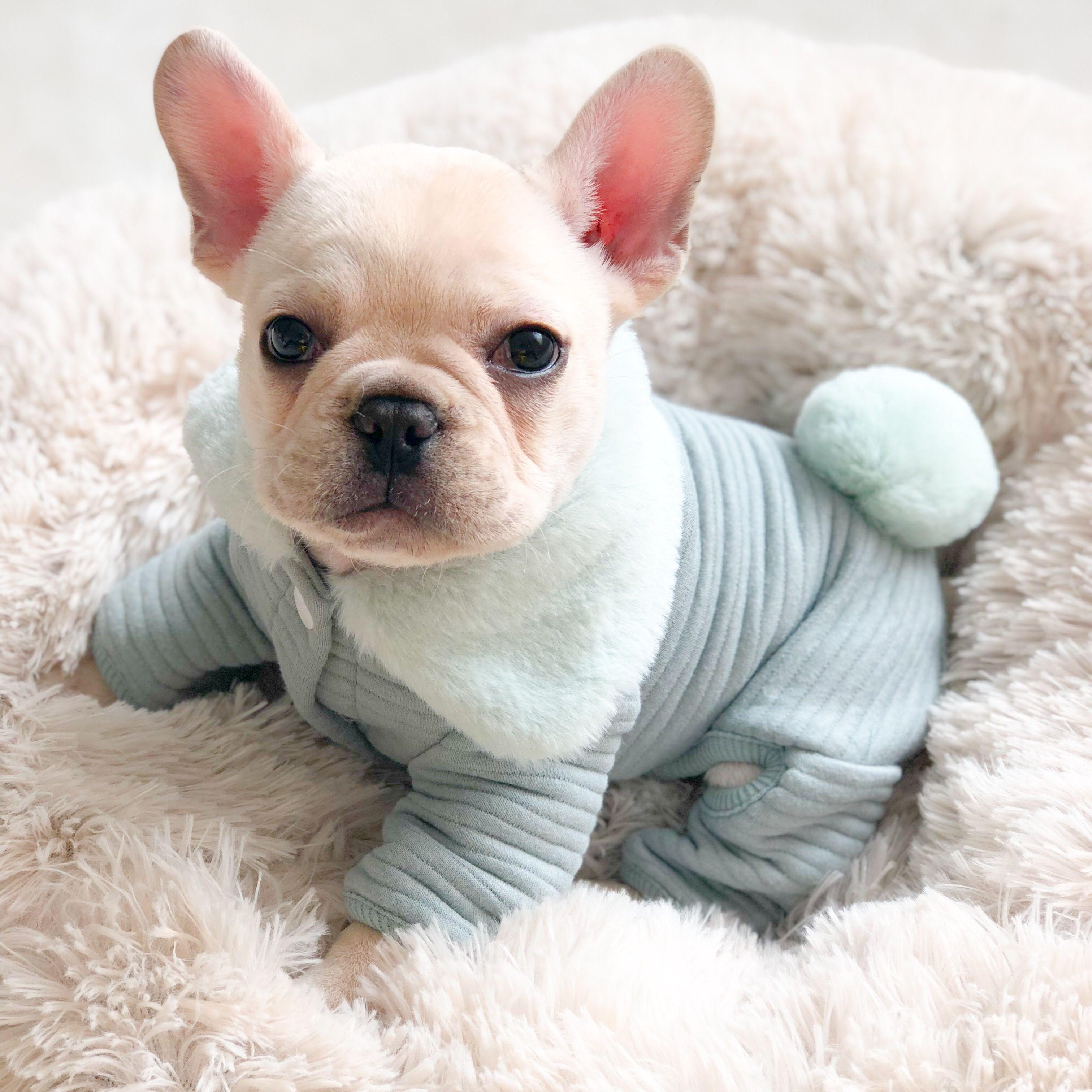 Comfy Dog Jumpsuit Pajamas for Frenchies Dog pajamas