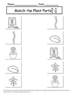 Image result for types of plants worksheets for kindergarten ...
