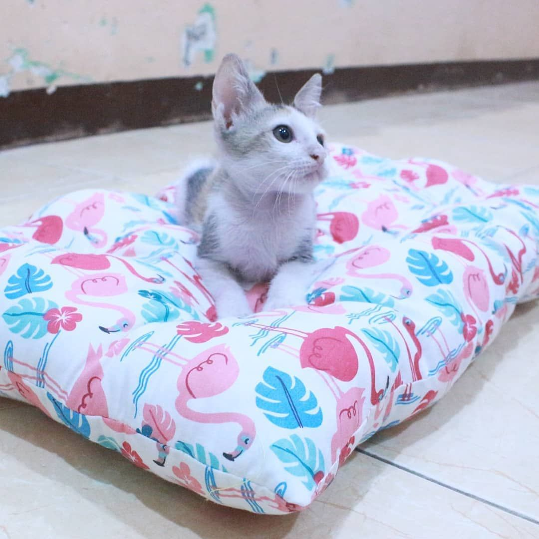 Kucing Baju