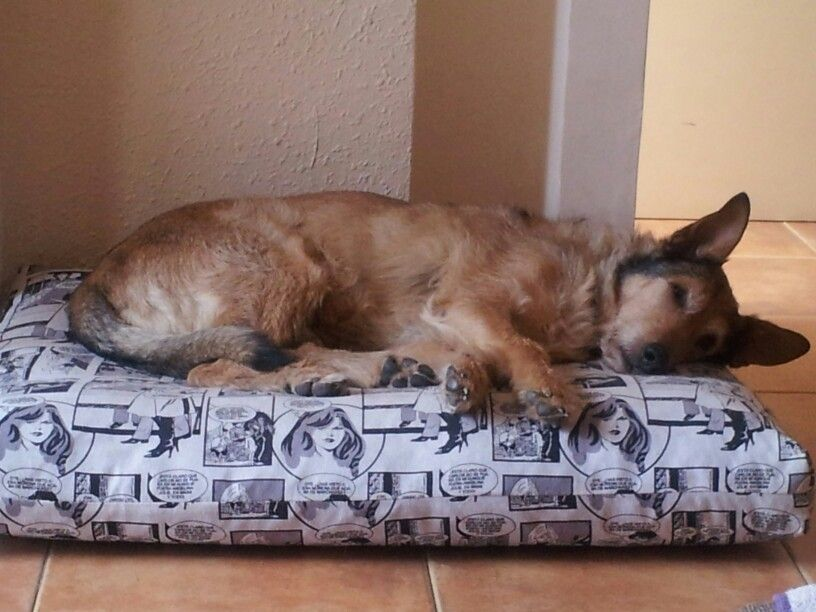 My angel sleeping on his new bed