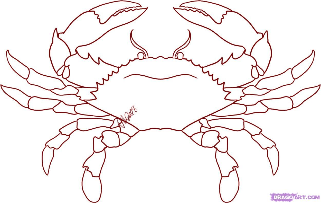 how to draw a crab step by step sea animals animals free online drawing tutorial added by dawn december 16 2008 8 51 13 pm [ 1250 x 789 Pixel ]