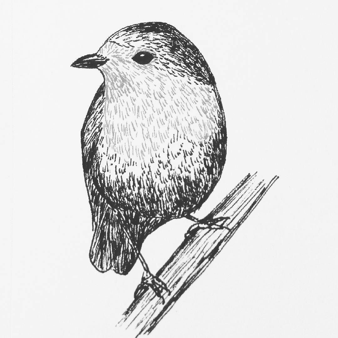 Another robin red breast   #dailydrawing #day75 #practice #drawing #ink #inkdrawing #bird #ilovebirds http://ift.tt/2hxDJId Another robin red breast  dailydrawing day75 practice drawing ink inkdrawing tumblr bird i