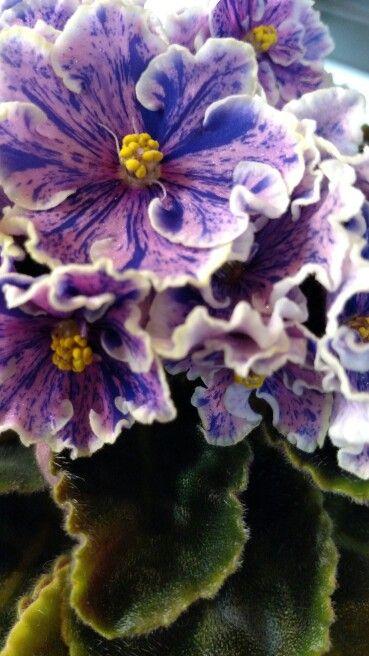 Пин от пользователя Helena 68 на доске комнатные цветы ...