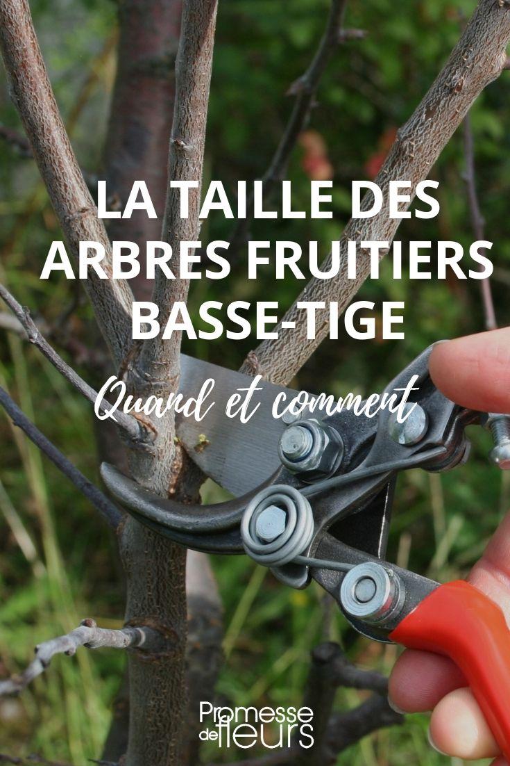 La Taille Des Arbres Fruitiers Basse Tige Quand Et Comment Taille Arbre Fruitier Taille Des Arbres Et Jardin Fruitier