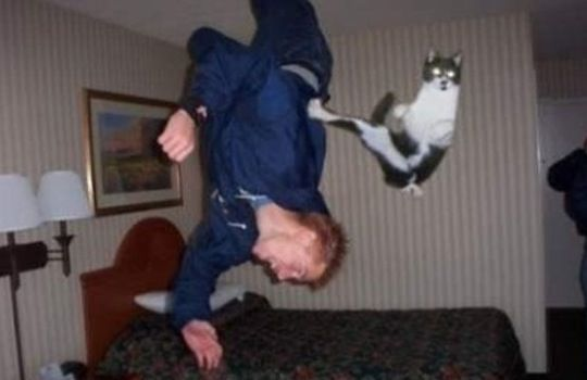 Purrfectly timed photos
