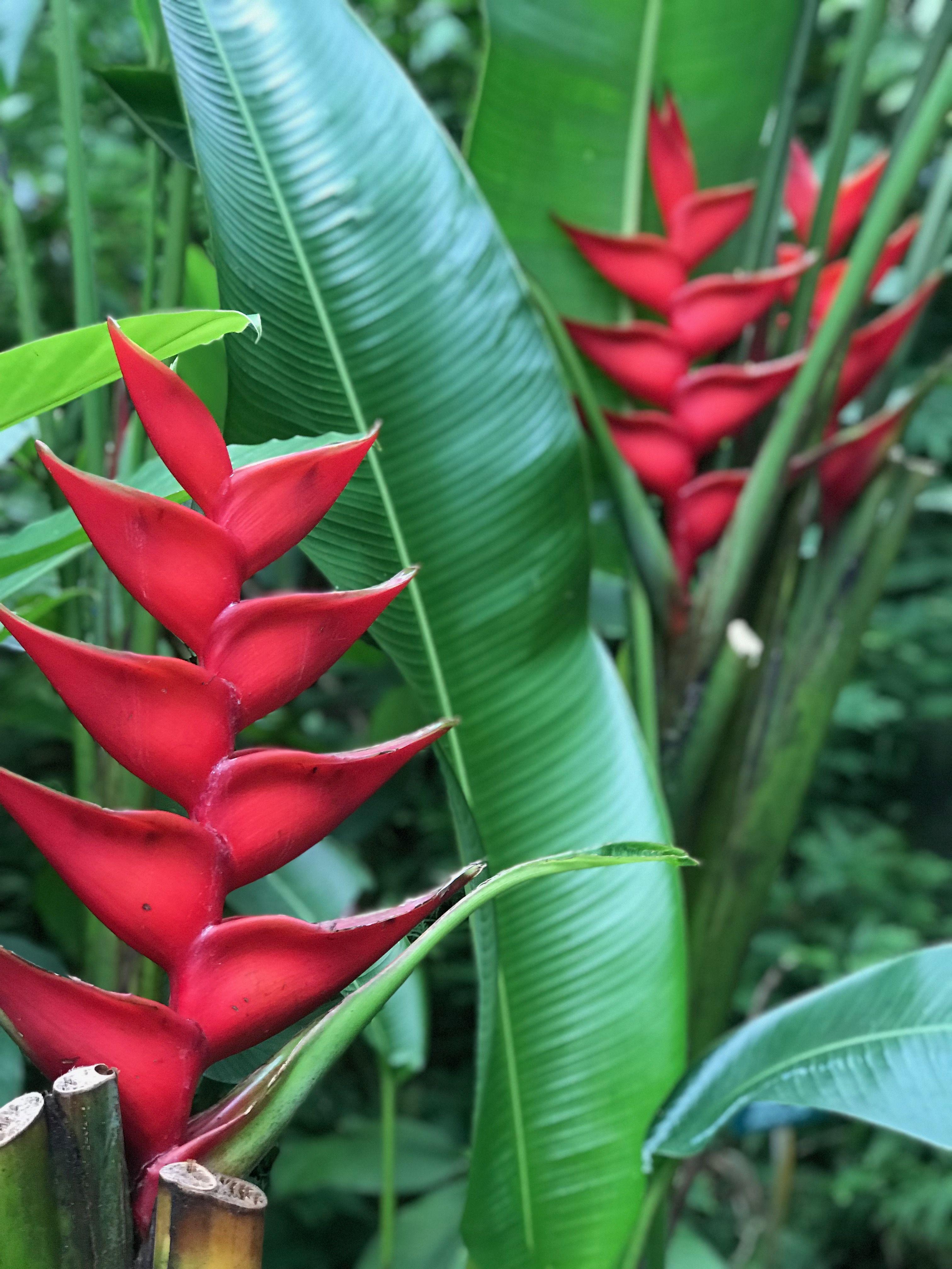 Tropical Botanical Gardens, Big Island Hawaii Gardening