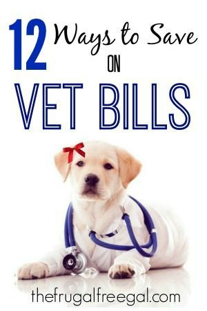 12 ways to save big when it comes to vet bills | Freebies and Free Samples