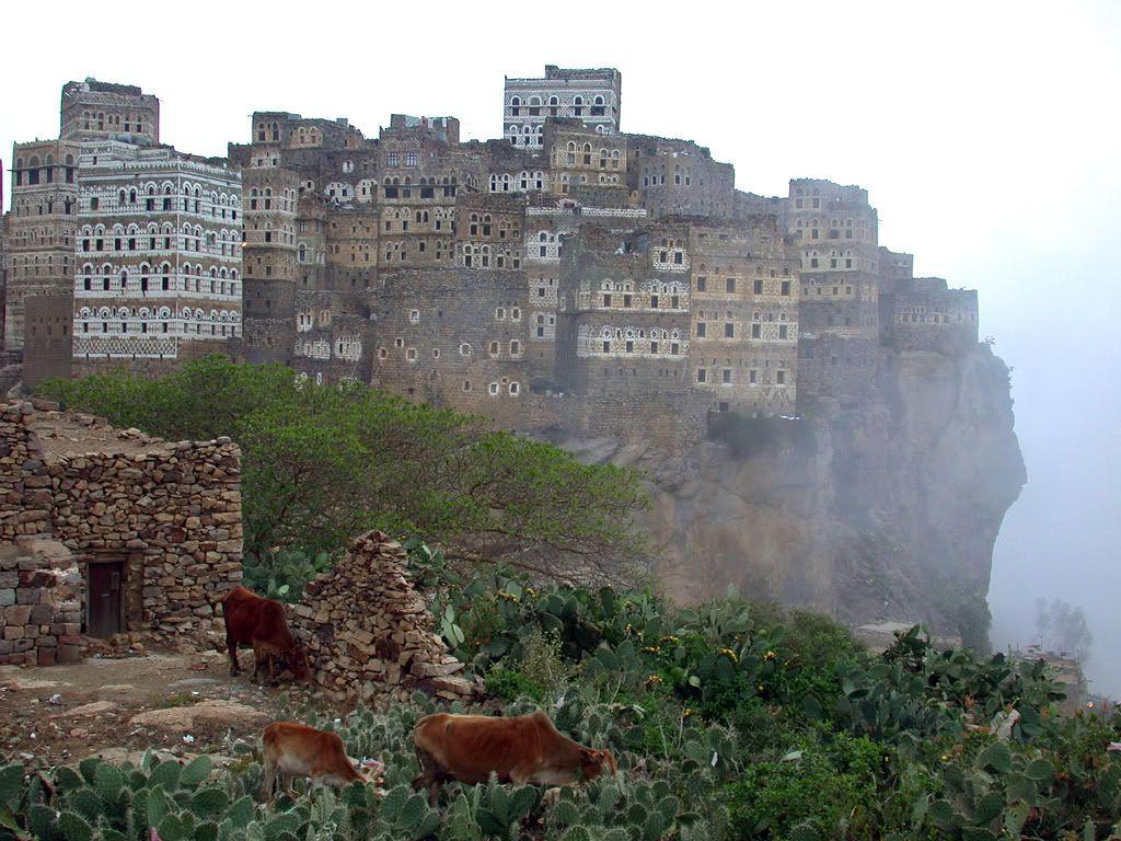 Socotra again