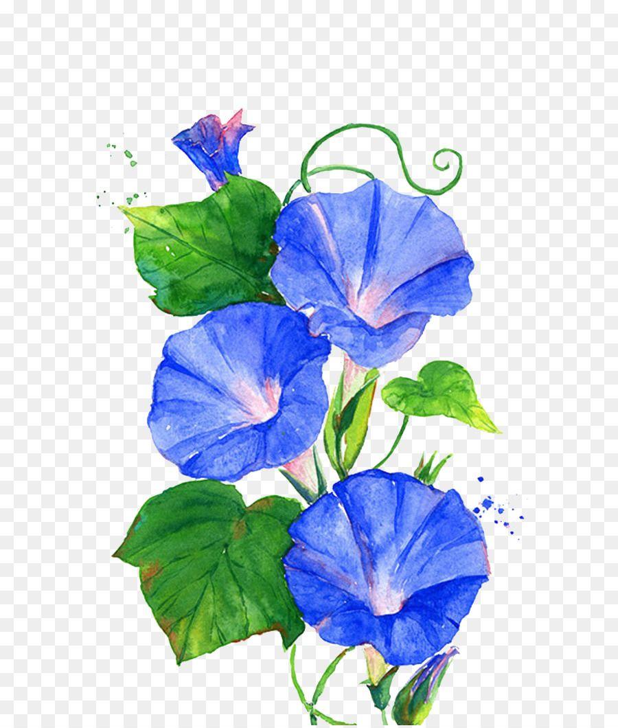 Ipomoea Nil Flower Vine Blue Trumpet Flowers Flower Drawing Flower Art Flower Painting
