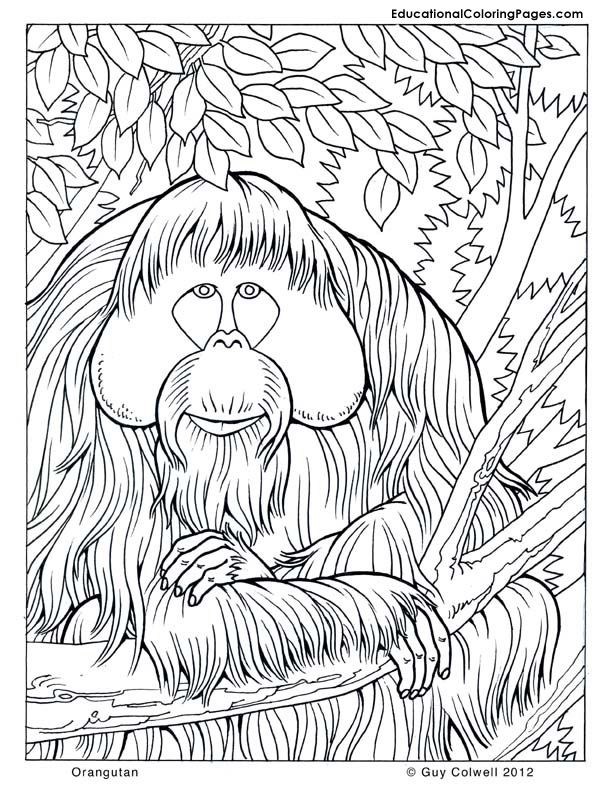 Nature Coloring Pages Animal Coloring Pages For Kids Animal