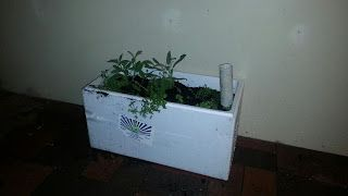 Self Irrigating Planter with herbs