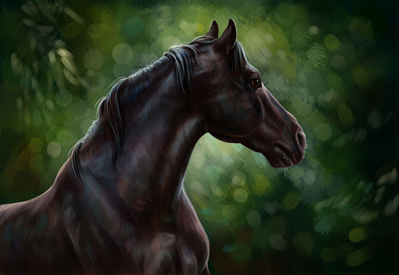 1436 Cheval Fonds D Ecran Hd Arriere Plans Wallpaper Abyss Fonds D Ecran Cheval Gratuit Fond Horse Wallpaper Horses Black Horse