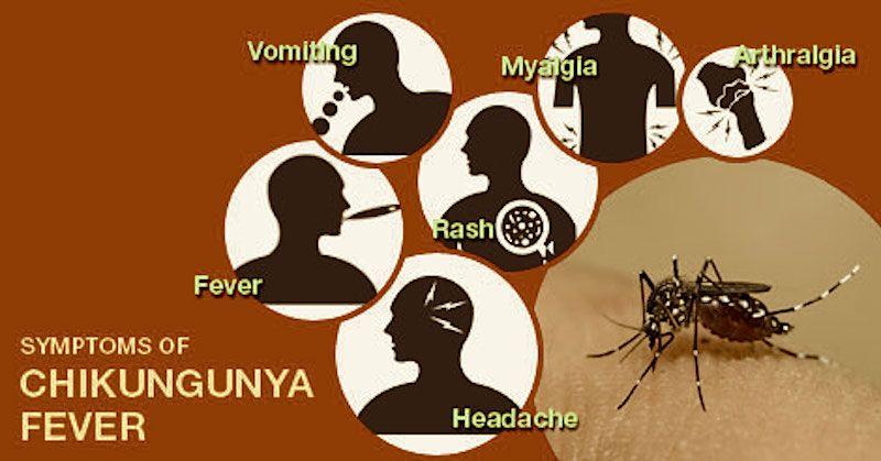 Homeopathic Medicine For Chikungunya Fever Dr Manish Bhatia Homeopathic Medicine Homeopathy Homeopathic