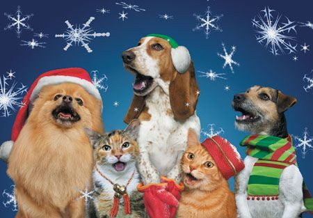 Funny Christmas Family Pictures Picture Dog Who Is
