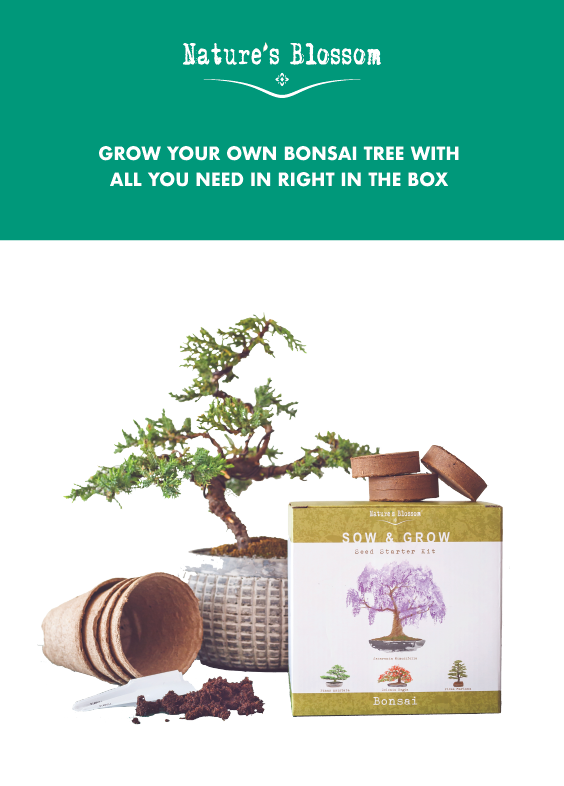 Nature S Blossom Bonsai Tree Kit Grow 4 Types Of Trees From Seed Bonsai Tree Bonsai Kit Fall Vegetables To Plant