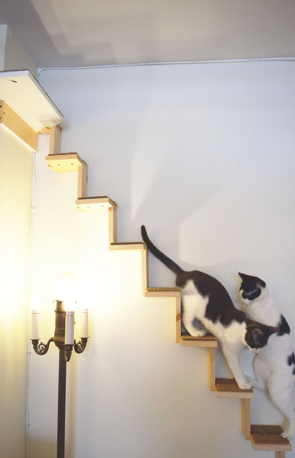 Cat Staircase. Cats can climb from floor to ceiling. Turn