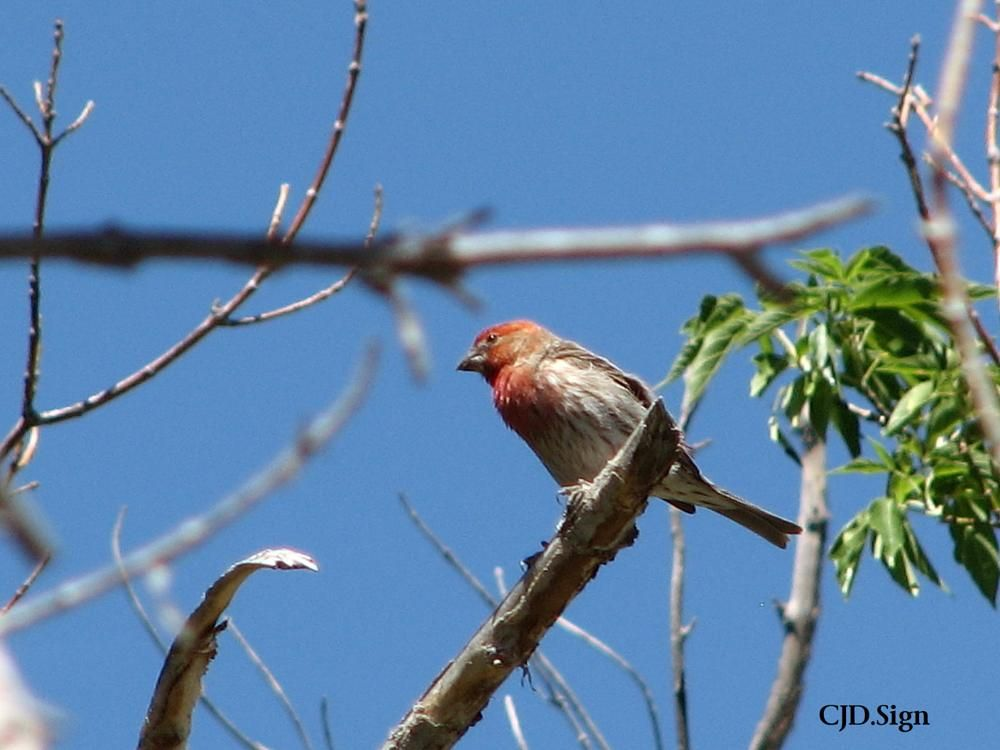 Photo Taken With Canon Powershot S3 Is Canon Ef 35 135mm F 3 5 4 5 Colorado Nature Youpic Photo Canon Powershot Finch
