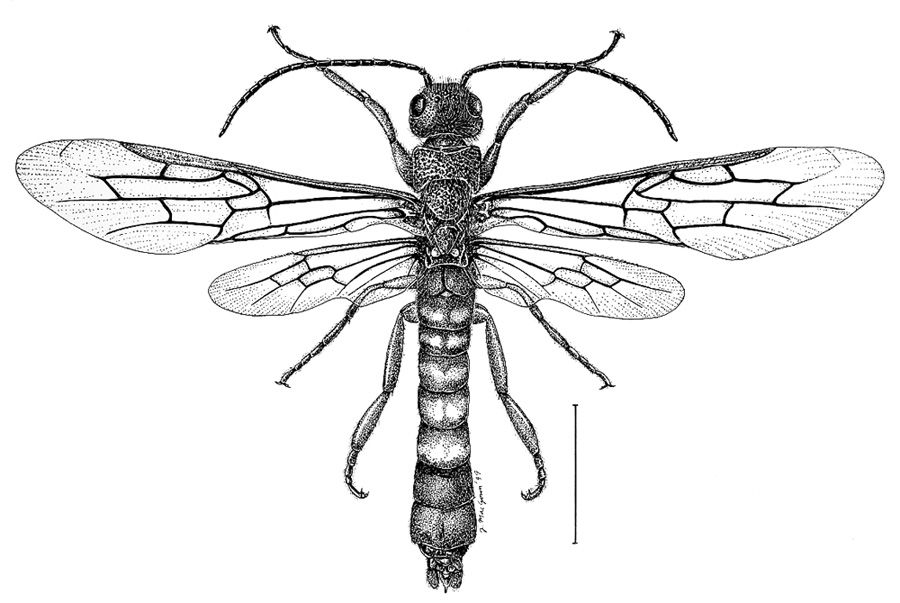 Line Drawing Insects : Drawings of insects joe macgown s insect and
