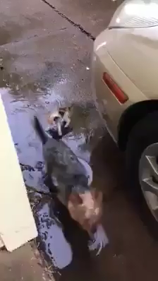Dog Brings Home Stray Kitten