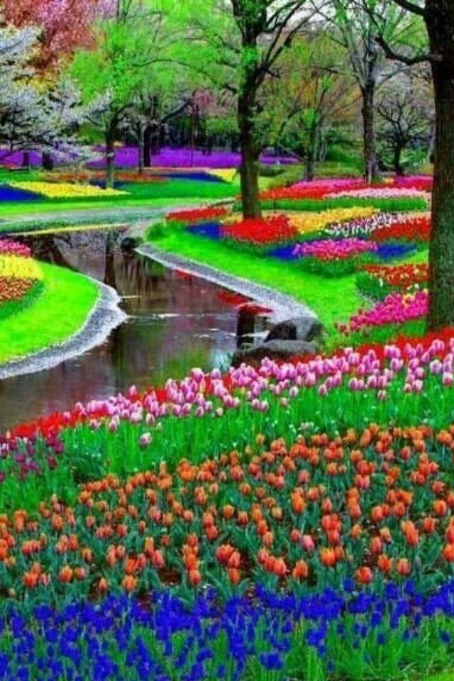 Pin di marbella su nature colors pinterest paesaggi - Alberi bassi da giardino ...
