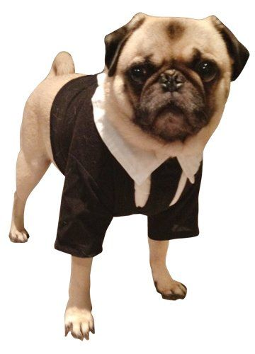 Amazon Com Men In Black Dog Costume For Medium Dogs Clothing