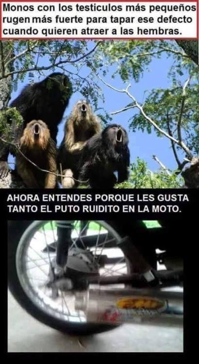 monos con los-Imagen Graciosa de Hoy nº 87177