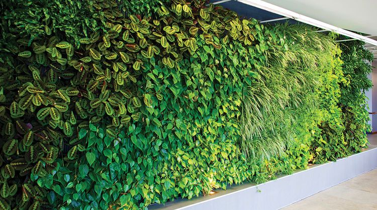 A Woolly Pocket professional green wall   Living wall ... on Green Wall Patio id=18773