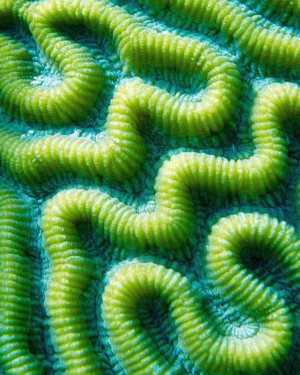 What is this?  Allow students to write their imaginative ideas and then share with them what it actually is - Brain coral.