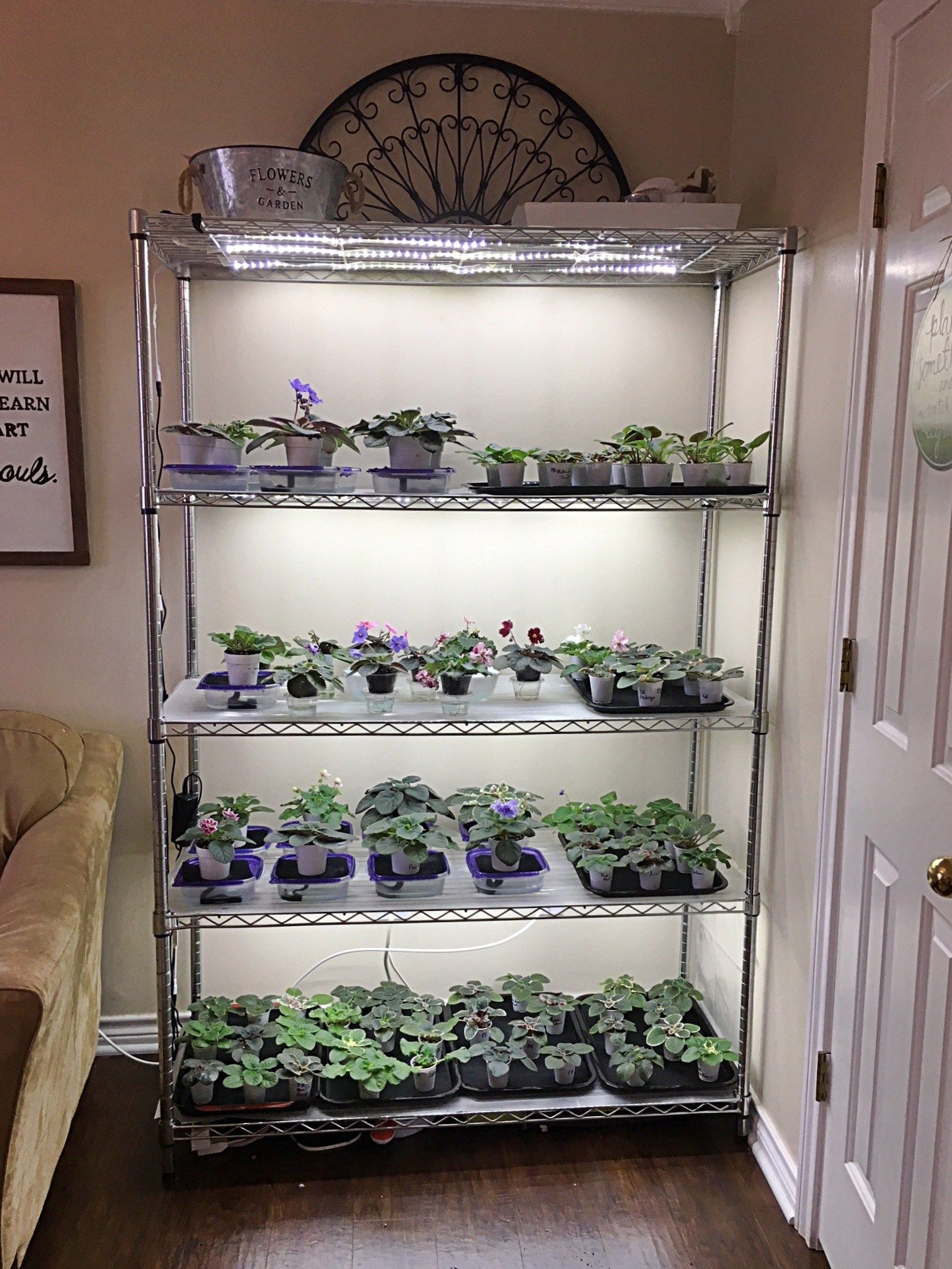 How To Grow Plants with LED Lights | African Violet Light Stand