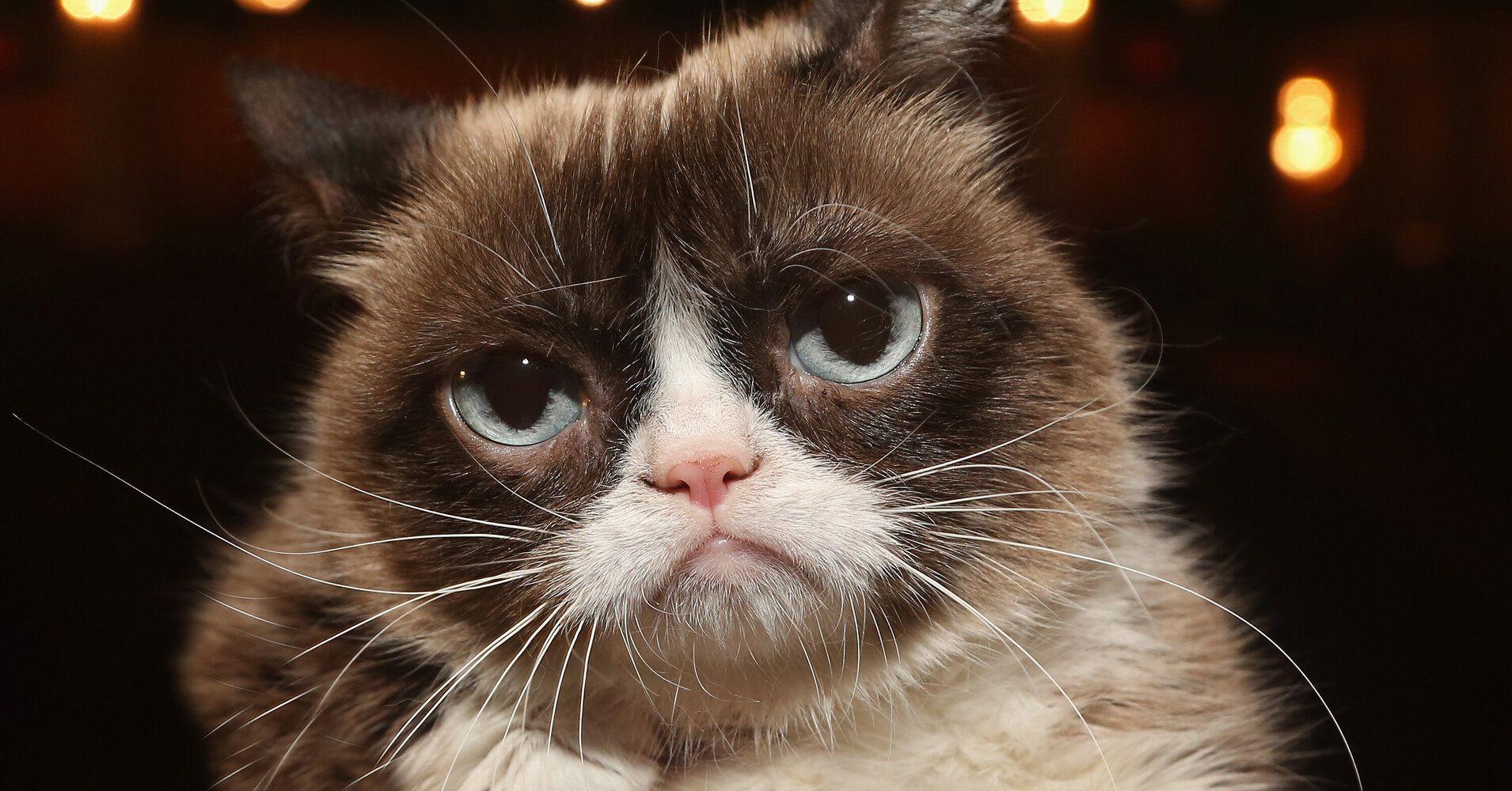 Internet Sensation Grumpy Cat Has Died | Grumpy cat ...