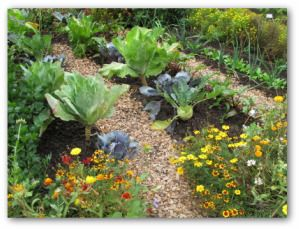 Free Guide For Companion Planting Of Vegetables When Gardening At Home.  Helpful Tips For Planning A Healthy And Productive Vegetable Garden By  Companion ...