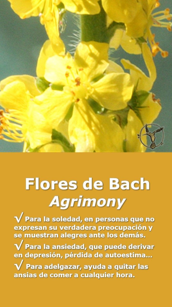 Flores de bach para adelgazar sirven los masajes