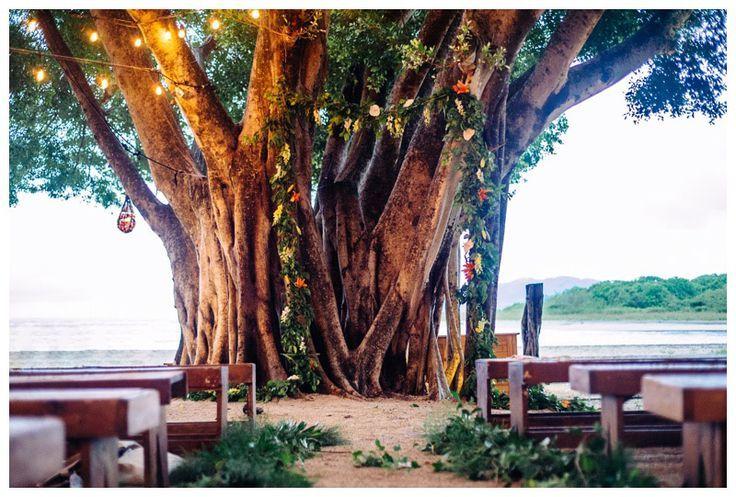 Wedding Ceremony Under A Gorgeous Tree At Pangas Beach Club In Tamarindo Costa Rica
