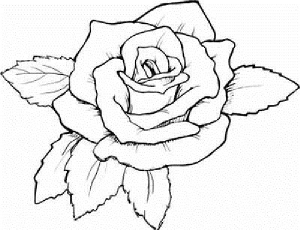coloring pages of rose flowers coloring kids Pinterest Rose