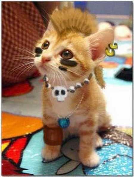 Mohawk kitty
