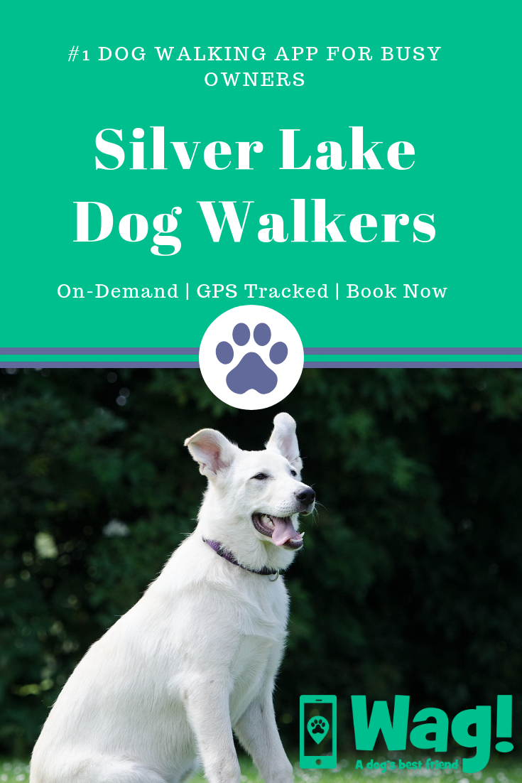 Best Dog Walkers In Silver Lake Of Los Angeles Ca Dog Training