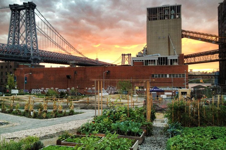 A new form of green space: North Brooklyn Farms converts abandoned lots into urban farms!