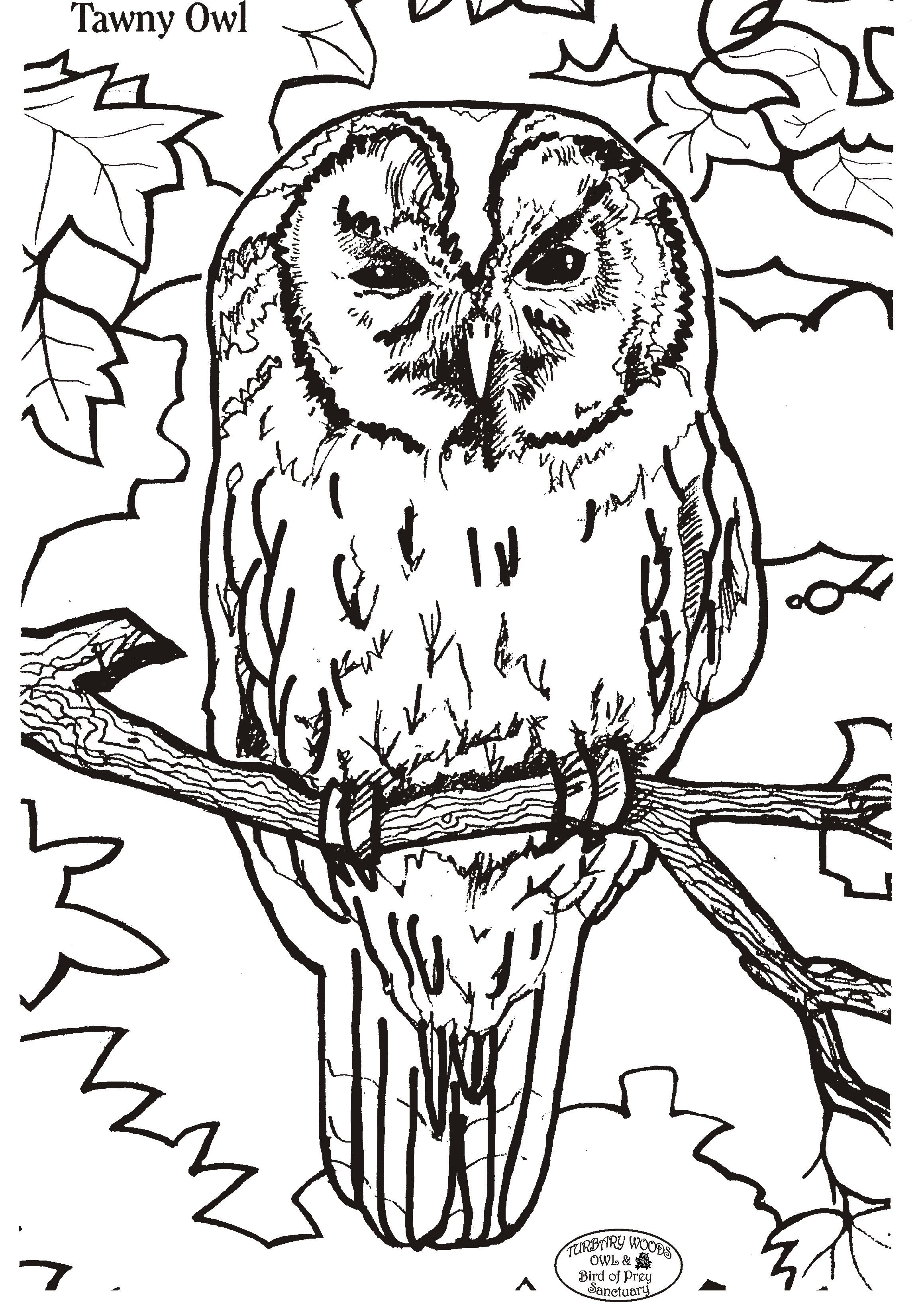 owl coloring pages free printables | Printable coloring ...