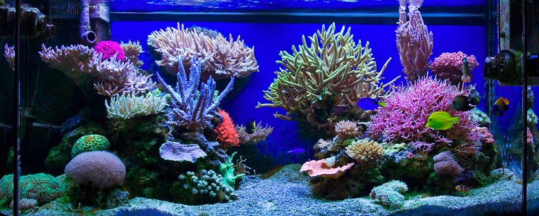 Nice Colors Additional Photos On Page Reef Tank