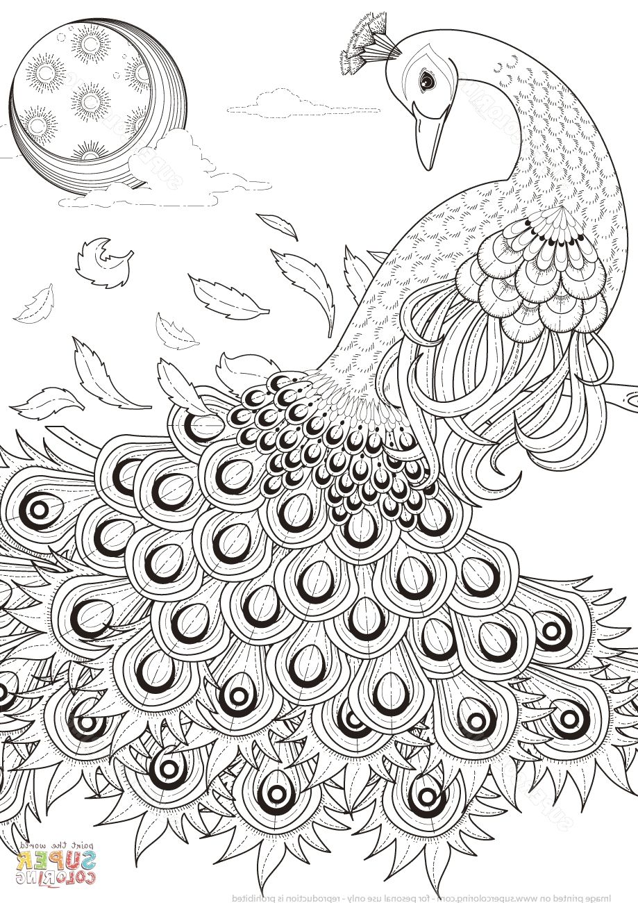 Peacock Coloring Pages | Peacock coloring pages, Coloring ...