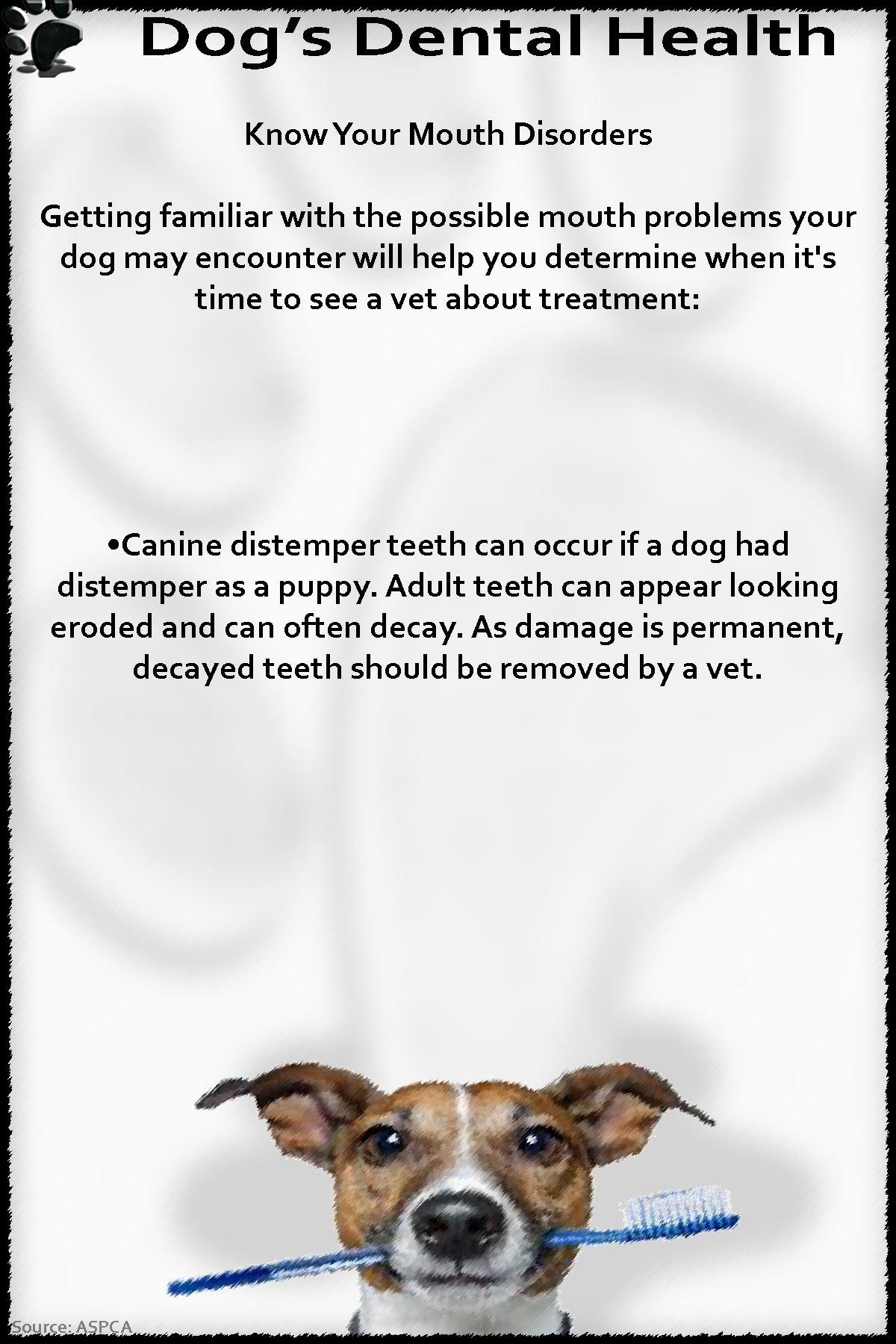 Dental health dog dental health dental health dental
