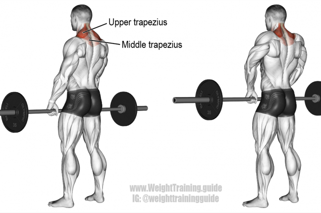 Best back exercises for lower, middle, and upper back